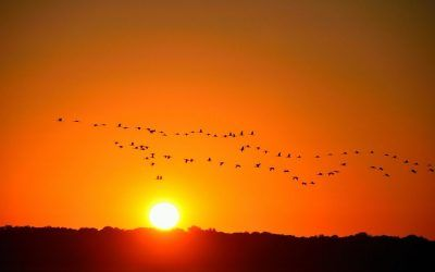 How to manage sundowning?